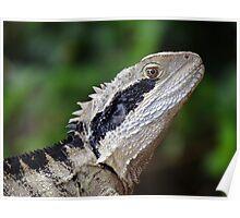 Wild Eastern Water Dragon Poster