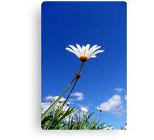Soak up the Sun Daisy Canvas Print