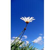 Soak up the Sun Daisy Photographic Print