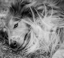 Bad Hair Day by Allport Photography