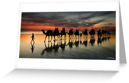 Cable Beach Camel Train by Sheldon Pettit