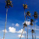 Sunny Blue Sky by Steven  Siow