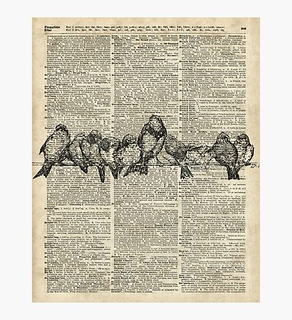 Vintage Birds On Branch Dictionary Art Photographic Print