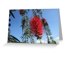 Callistemon Greeting Card