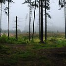 Fog and Fog from my summer house district by Antanas