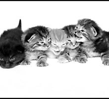 Kittens by NJMphotography