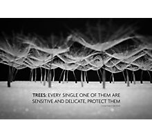 Protect trees in black and white  Photographic Print