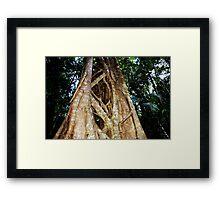 Tree Coffs Harbour Rainforrest Framed Print