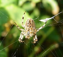 Garden Spider by LoneAngel