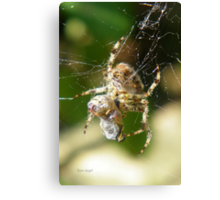 Spider Prisoner Canvas Print