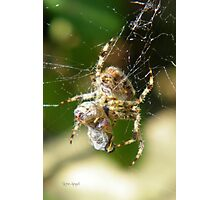 Spider Prisoner Photographic Print