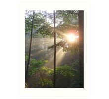 sun rays thru the trees Art Print