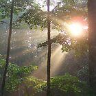 sun rays thru the trees by tamarama