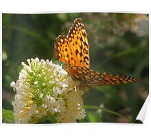 """""""September Butterfly"""" - 1 Poster"""
