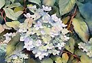 White Hydrangea by Ann Mortimer
