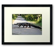 Alligator on the Path Framed Print
