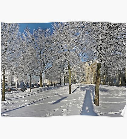 White Winter Trees Poster
