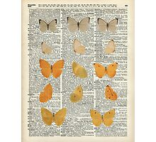 Yellow butterflies over encyclopedia book page,Monarch Butterfly Dictionary Art Photographic Print