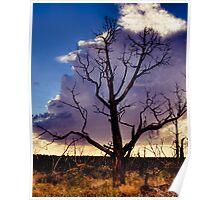 Desolate Mesa Verde Poster