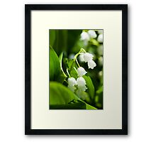 Lily of the valley flower Framed Print