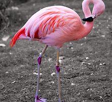 Flamingo by photo-Art