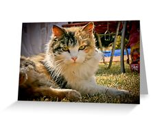 All is good  Greeting Card