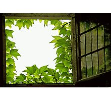 Window Photographic Print