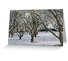 An Orchard of Snow, Ireland Greeting Card