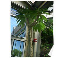 Madagascar Palm Poster