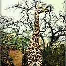 Ginny's Giraffe by Roger Sampson
