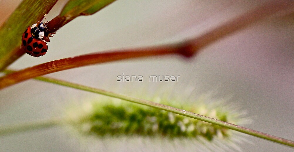 Autumn dance by siana  muser