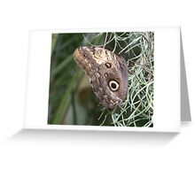 Giant Owl Butterfly (Caligo memnon) - Resting on Spanish moss Greeting Card
