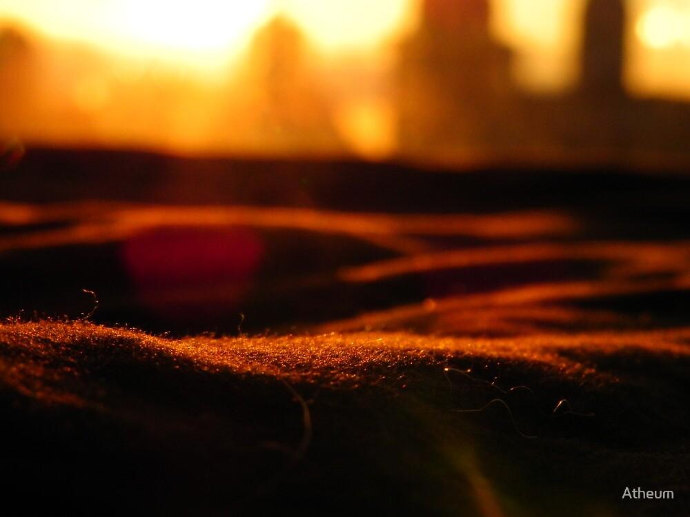A Warm City Sun by Atheum