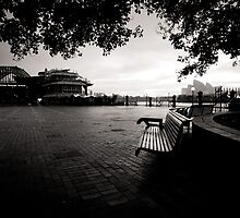 The bench by Trish O'Brien