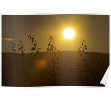 Magic light of Lommedalen IV Poster