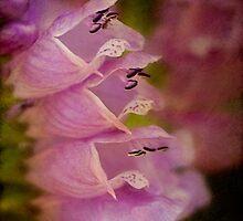 False dragonhead flowers by Celeste Mookherjee