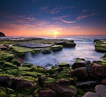 Green Moss @ Turrimetta by Jason Pang, FAPS FADPA