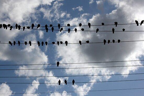 Pigeons by Jack  Preston