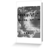 Pigeons 2 Greeting Card