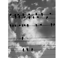 Pigeons 2 Photographic Print