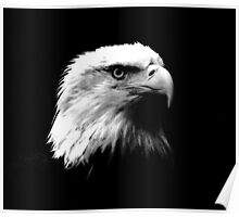 Black & White American Bald Eagle Poster