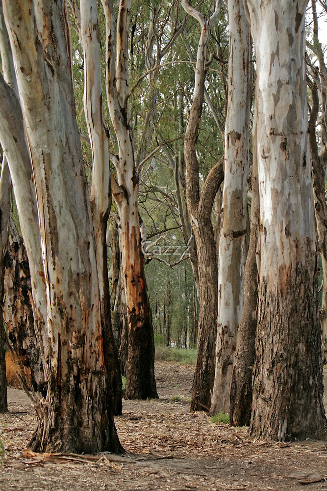 Red gums, beside the Murray River near Robinvale by Cazzz