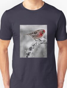 Red Poll -- Cold, But Hungry T-Shirt