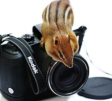 """Rule #1:   """"Always Remove The Lens Cap""""... by Laurie Minor"""