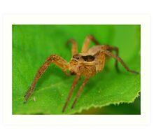 wold spider Art Print