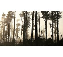 misted trees  south westland  nz Photographic Print