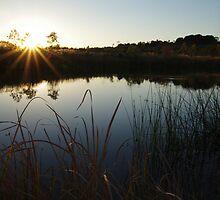Sunset Rays by Linda Fury
