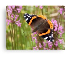 Red Admiral Wings Spread Canvas Print
