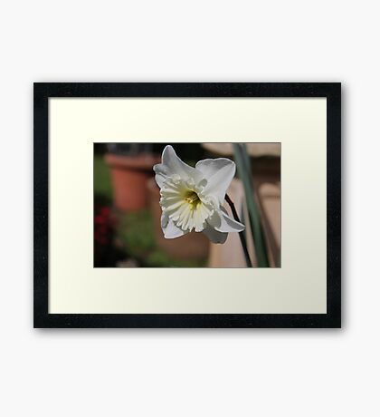 United Colours of Nature  Framed Print