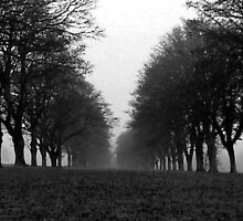 Avenue - Cornbury Park, Oxfordshire by Reuben Vick